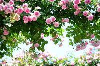 Garden Necklace YOKOHAMA 2017(12) - 今日の小さなシアワセ