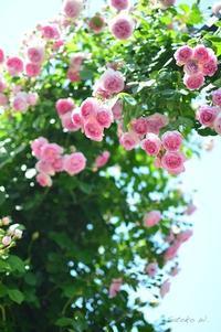 Garden Necklace YOKOHAMA 2017(15) - 今日の小さなシアワセ