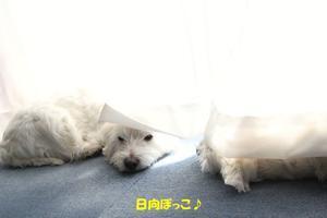 わんわんシャーベット♪ - ☆メルのわんぱく日記☆