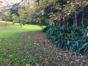 ちょっぴり紅葉/ Turning of Leaves in My Garden - アメリカからニュージーランドへ