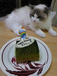 ライル 1歳のお誕生日おめでとう!! - Chelsea Cafe