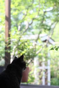 バラ - 小さな森のキキとサラ