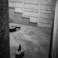 シンクロする美術館の中庭 - Film&Gasoline