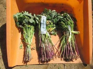 サツマイモ苗(蔓)の定植&センターのオアシス用の棚が完成 - 千葉県いすみ環境と文化のさとセンター