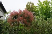 けむりの木 - 「今日の一枚」