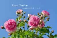 """Rose Garden~山口宇部空港~...5/23tue - SHOP ◆ The Spiralという館~カフェとインポート雑貨のある次世代型セレクトショップ~"