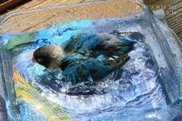 水浴びB.Bの記録 → (blueがお似合い・5月16日) - FUNKY'S BLUE SKY