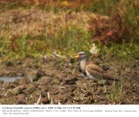 大久保農耕地A区 2017.5.20 - 鳥撮り遊び