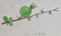 #植物スケッチ『草木瓜の若い果実』 - スケッチ感察ノート