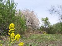 虹 - 浅間高原・北軽井沢 ペンション・ローエングリンの高原日記