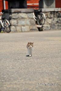 福を招く猫 - Liberty Photo Cafe