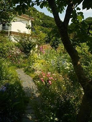 open garden - 古道具ときどき猫。