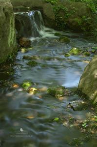 渓流遊び - お花びより
