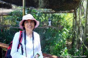 ベリーズ動物園の Harpy Eagle(ハーピーイーグル) - とことん写真