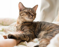ミッちゃん、危機一髪 - 猫と夕焼け
