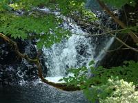 『釜ヶ滝周辺を歩いて・・・・・』 - 自然風の自然風だより