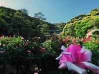 鎌倉文学館とバラ - うつわ愛好家 ふみの のブログ