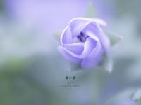 """蒼い春 Vol.06 - ATELIER 302 """" 時の色 """""""
