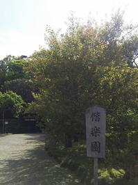 GW水戸の旅 その3(偕楽園) - so much Life