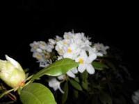 白い花 - 日々の風音