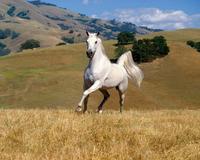 白馬の尾 The Tail Hair of White Horses - my gallery-2