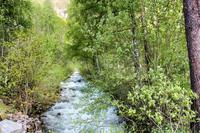 ノルウェーの樹と川と滝と湖と女性 - I shall be released