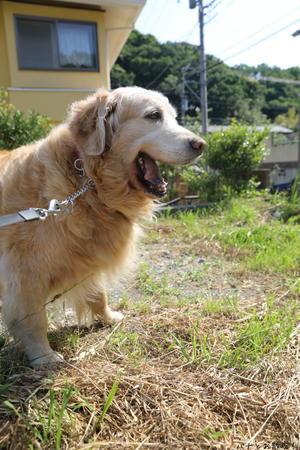 福笑い♪ - ハナとお散歩!