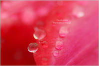 rain drops - It's only photo