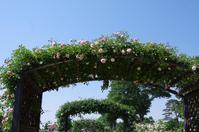バラの香りに包まれて ~ 敷島公園 Ⅱ - 季節の風を追いかけて