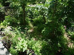 初夏の庭 - 庭日和