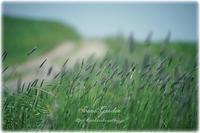 草原の唄* - Forest Garden