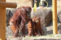 キキ&リキと静かなるジプシーさん - 続々・動物園ありマス。