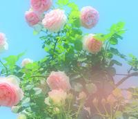 めがみさま - 三恵 poem  art
