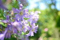 Garden Necklace YOKOHAMA 2017(14) - 今日の小さなシアワセ