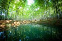 美人林 - 光の贈りもの