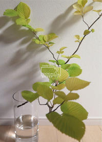 植物的生活804 - Atelier Botanique COCA-Z