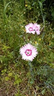 庭の花々~5月編~ - 猫とナチュラルキッチンが好き