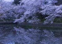 桜に感謝 - ほほえみ