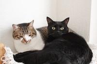 ベッドサイドテーブルの上も猫スペース - きょうだい猫と仲良し暮らし
