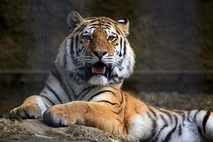 齧る「アルチョム」 - 動物園放浪記