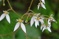 5年ぶりに野の花の宝庫、九鬼山に その7 - 季節(いま)を求めて