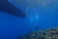 17.5.24 駆除活動 - 沖縄本島 島んちゅガイドの『ダイビング日誌』