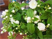 暮らしに役立つ花選び【五月梅】 - ルーシュの花仕事