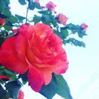 kinocoの整体日誌 - 整体天使kinocoがいく!!