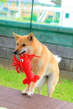 ヒトコマ写真㊱ - 結局ただの犬バカです。