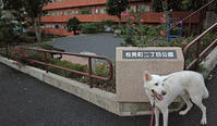 Vol.1186 松見町二丁目公園 - 小太郎の白っぽい世界