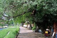 蔦の絡まる喫茶店 - 写心食堂