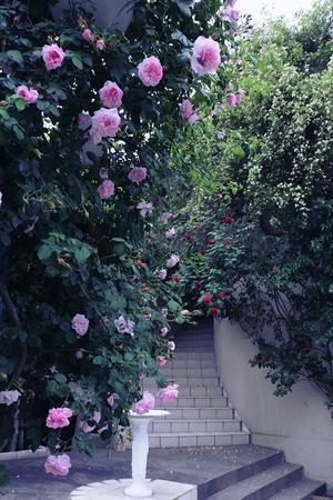 薔薇の館 - 「美は観る者の眼の中にある」