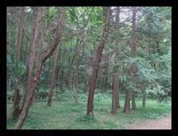 森林浴~里山ガーデン - ひだまり●●●陽のあたる場所みつけました