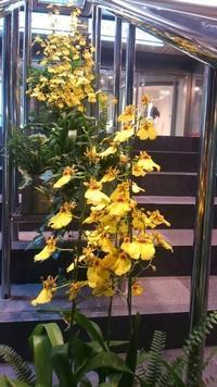 黄色い花って映えるねぇ~ - Entrepreneurshipを探る旅